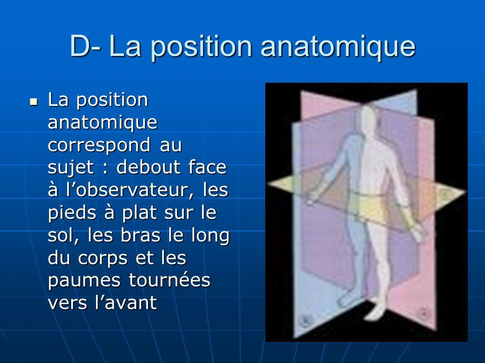 D- La position anatomique