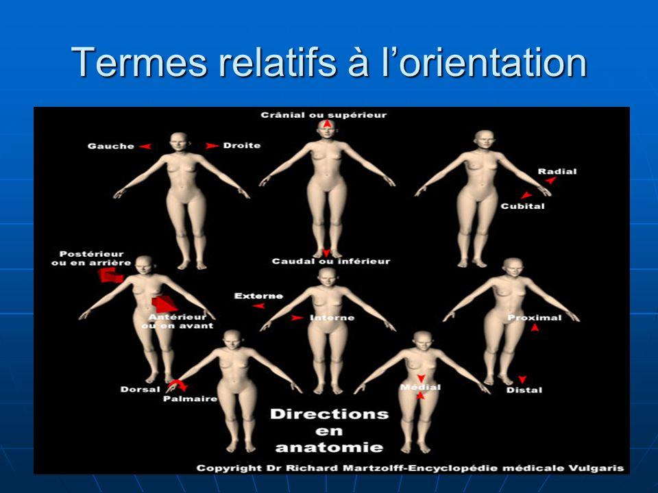 Termes relatifs à l'orientation