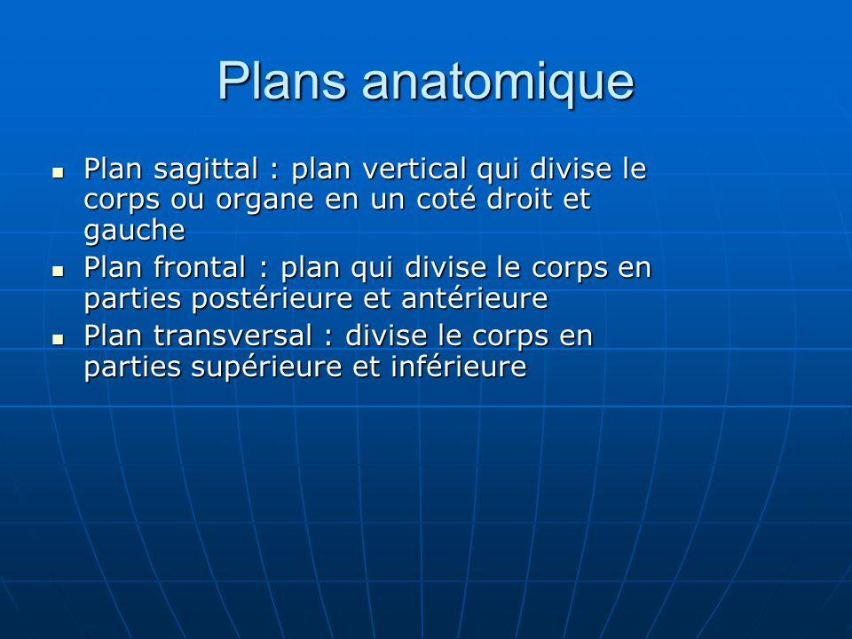 Plans anatomique Plan sagittal : plan vertical qui divise le corps ou organe en un coté droit et gauche.