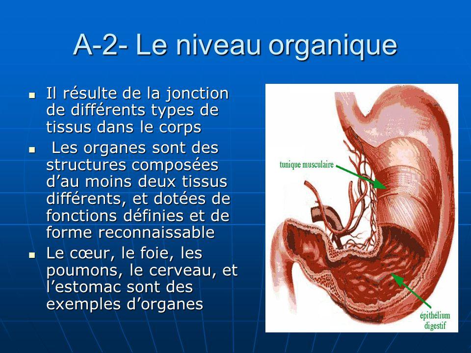 A-2- Le niveau organique