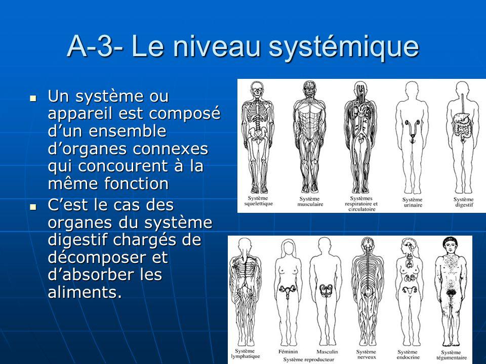 A-3- Le niveau systémique