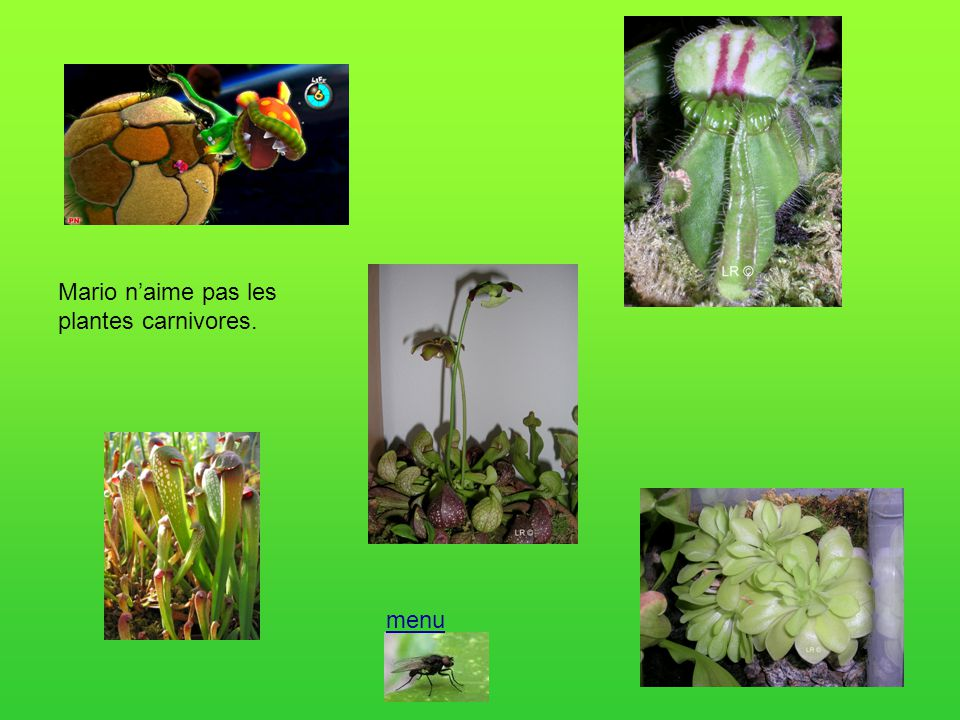 Mario n'aime pas les plantes carnivores.