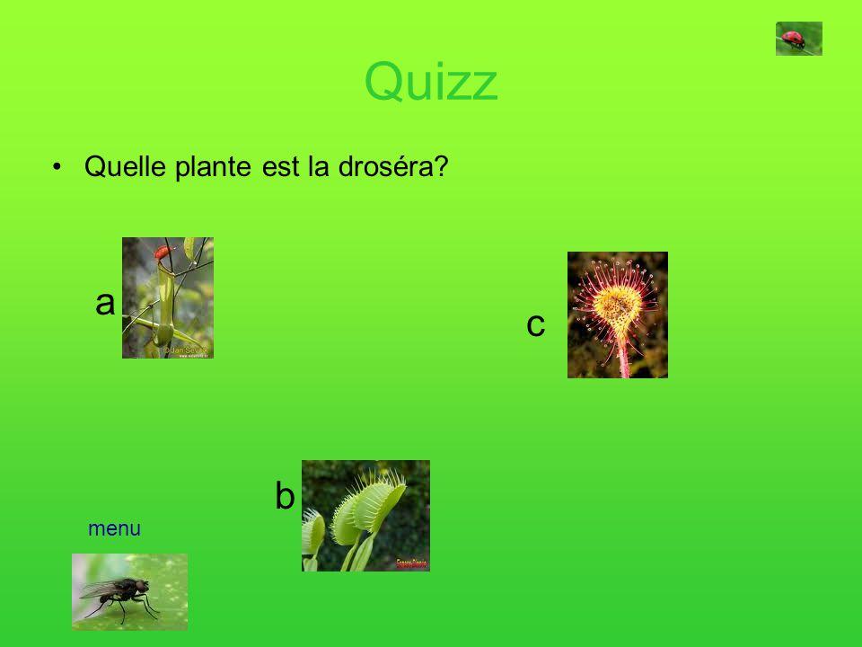 Quizz Quelle plante est la droséra a c b menu