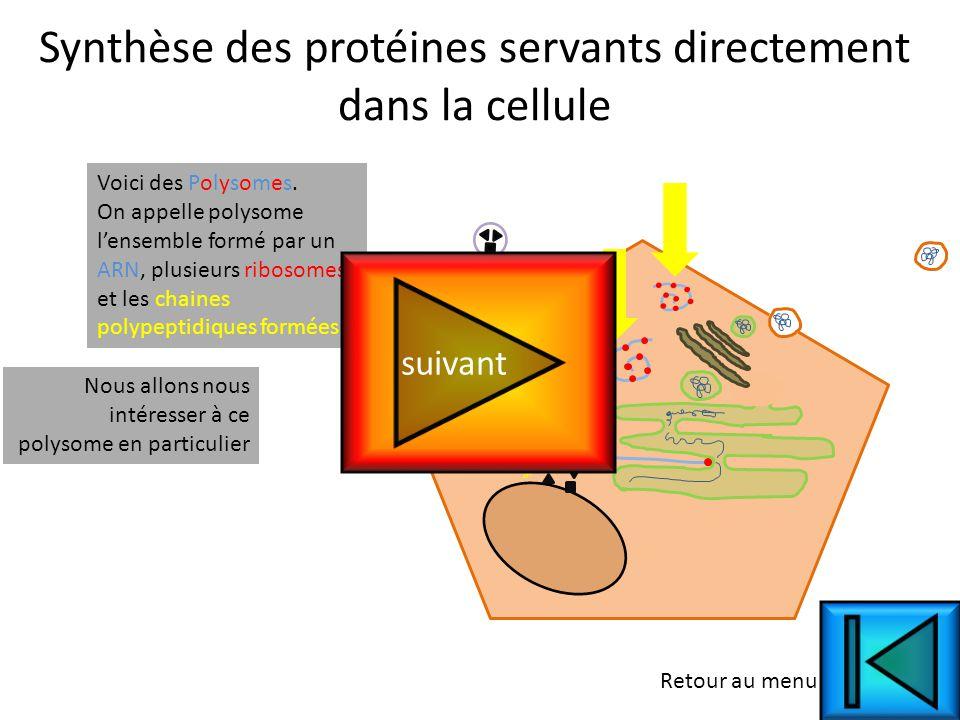 Synthèse des protéines servants directement dans la cellule