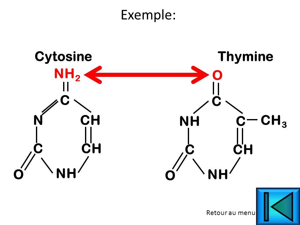 Exemple: Cytosine Thymine NH2 O C C N CH NH C CH3 C CH C CH O NH O NH