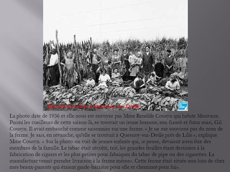 Récolte du tabac à Quesnoy sur Deûle