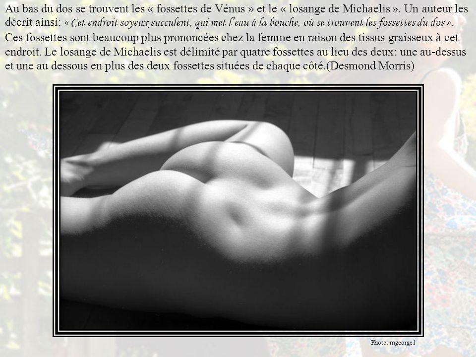 Au bas du dos se trouvent les « fossettes de Vénus » et le « losange de Michaelis ». Un auteur les décrit ainsi: « Cet endroit soyeux succulent, qui met l'eau à la bouche, où se trouvent les fossettes du dos ». Ces fossettes sont beaucoup plus prononcées chez la femme en raison des tissus graisseux à cet endroit. Le losange de Michaelis est délimité par quatre fossettes au lieu des deux: une au-dessus et une au dessous en plus des deux fossettes situées de chaque côté.(Desmond Morris)