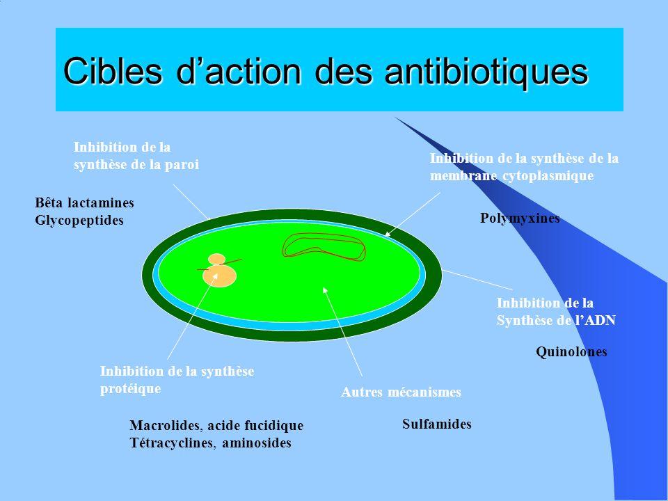 Cibles d'action des antibiotiques