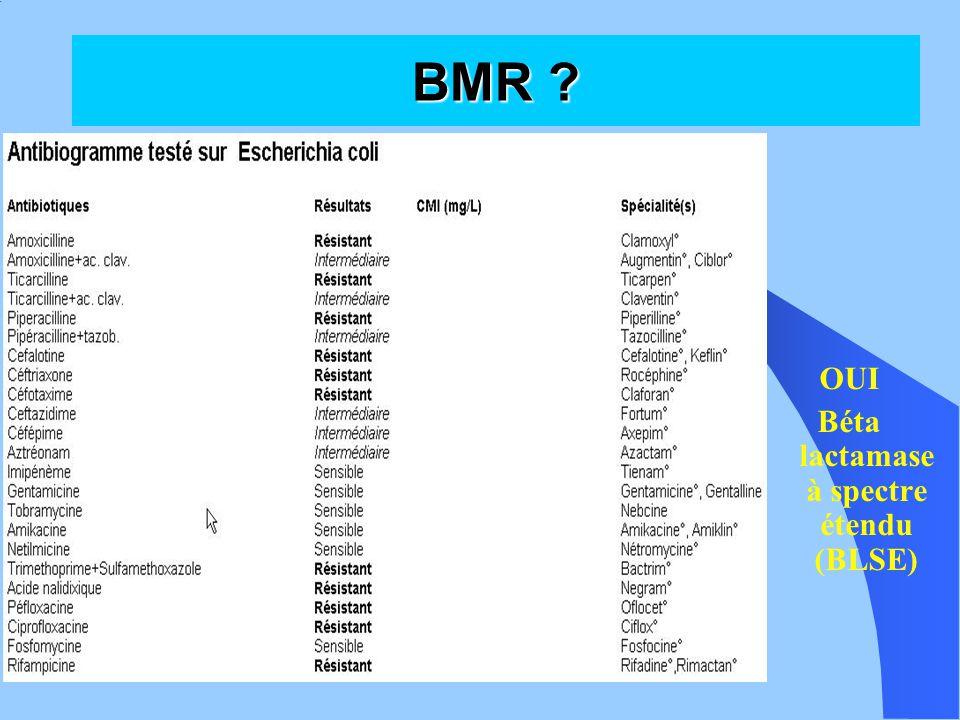 Béta lactamase à spectre étendu (BLSE)