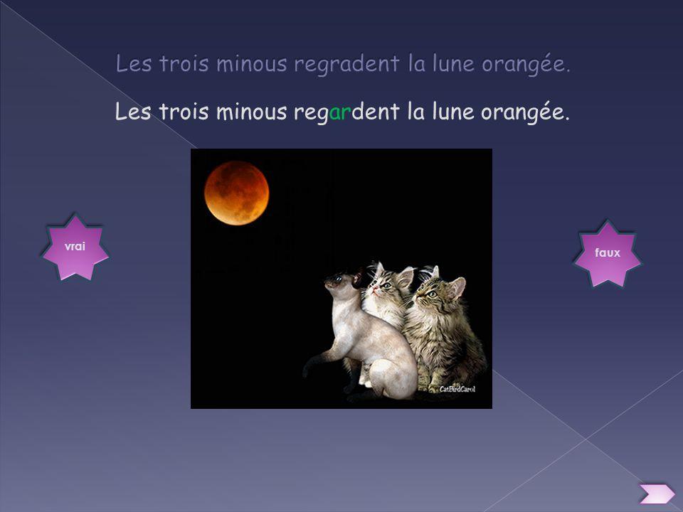 Les trois minous regradent la lune orangée.