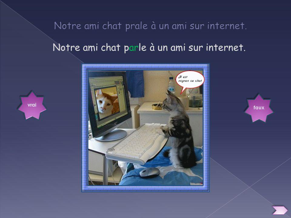Notre ami chat prale à un ami sur internet.