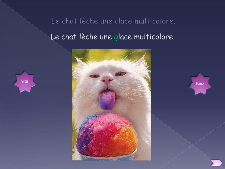 Le chat lèche une clace multicolore.