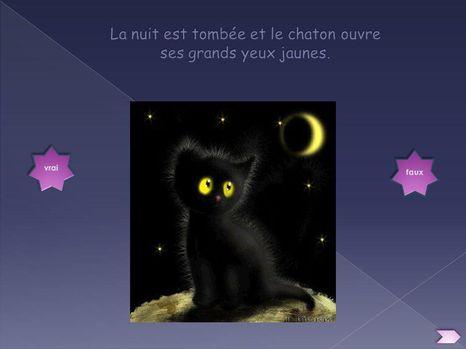 La nuit est tombée et le chaton ouvre ses grands yeux jaunes.