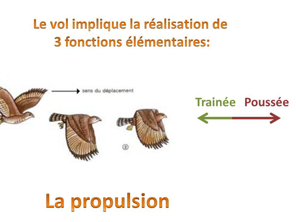 Le vol implique la réalisation de 3 fonctions élémentaires: