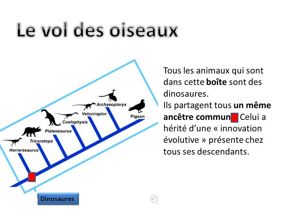 Le vol des oiseaux Tous les animaux qui sont dans cette boîte sont des dinosaures.