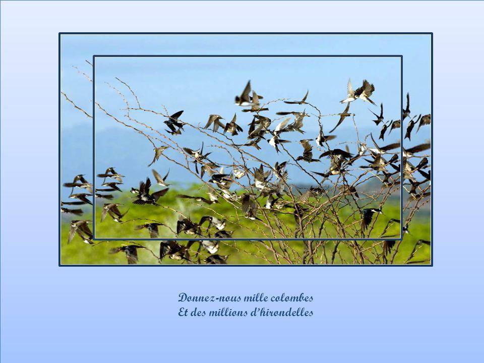 Donnez-nous mille colombes Et des millions d'hirondelles