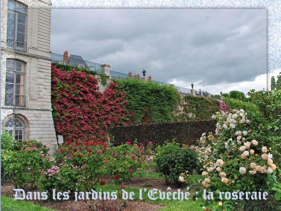 Dans les jardins de l'Evêché : la roseraie