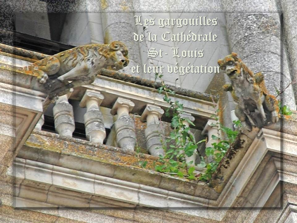 Les gargouilles de la Cathédrale St- Louis