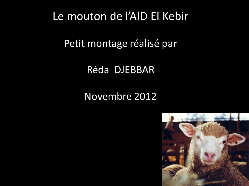 Le mouton de l'AID El Kebir