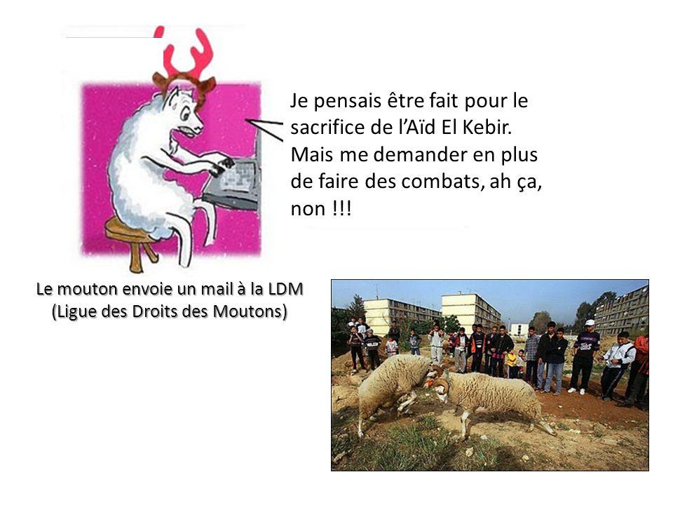 Le mouton envoie un mail à la LDM (Ligue des Droits des Moutons)