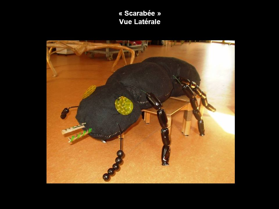 « Scarabée » Vue Latérale
