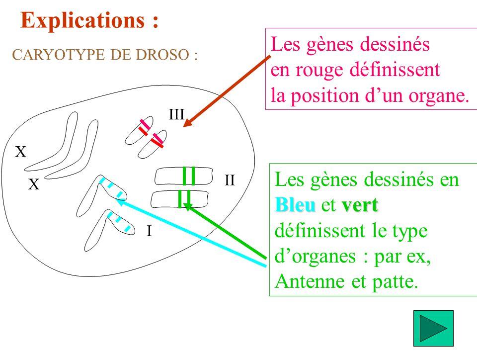 Explications : Les gènes dessinés en rouge définissent