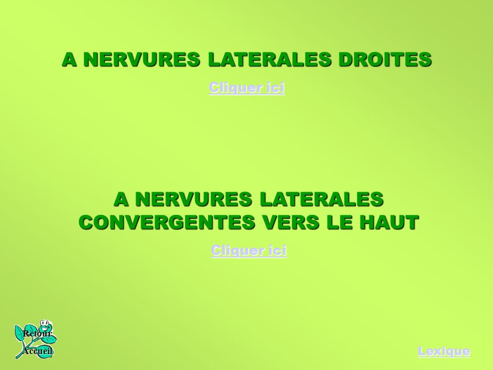 A NERVURES LATERALES DROITES
