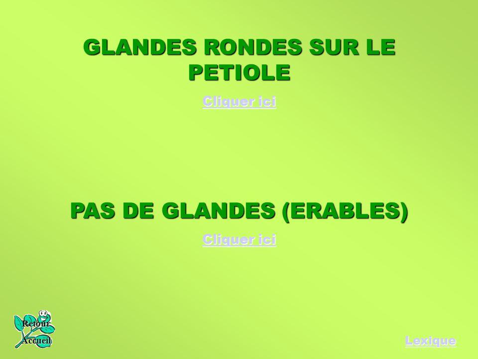 GLANDES RONDES SUR LE PETIOLE