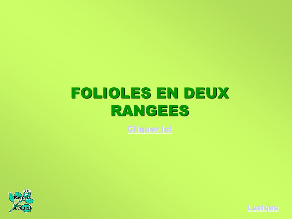 FOLIOLES EN DEUX RANGEES