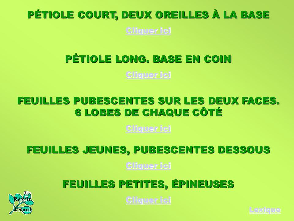 PÉTIOLE COURT, DEUX OREILLES À LA BASE