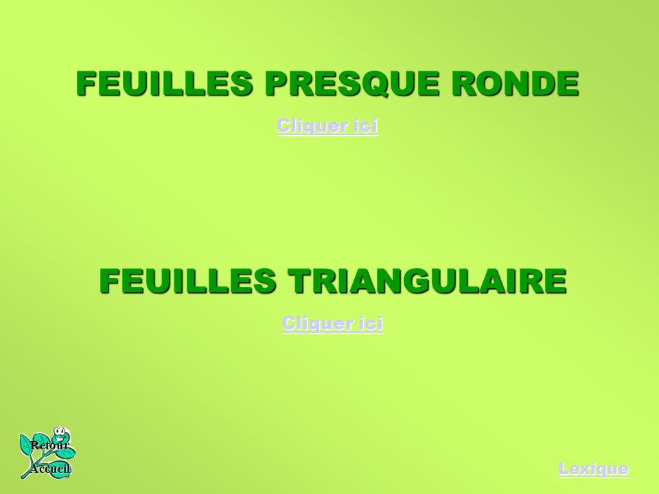 FEUILLES PRESQUE RONDE