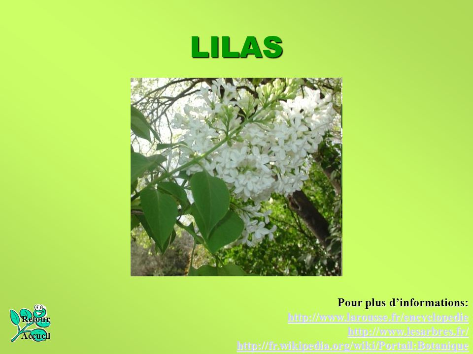 LILAS Pour plus d'informations: http://www.larousse.fr/encyclopedie