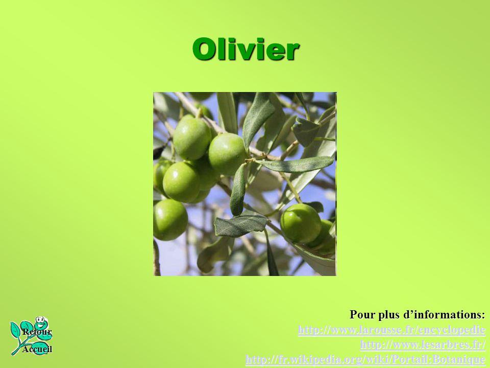Olivier Pour plus d'informations: http://www.larousse.fr/encyclopedie