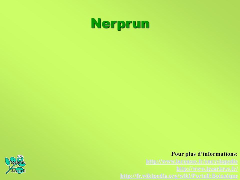 Nerprun Pour plus d'informations: http://www.larousse.fr/encyclopedie