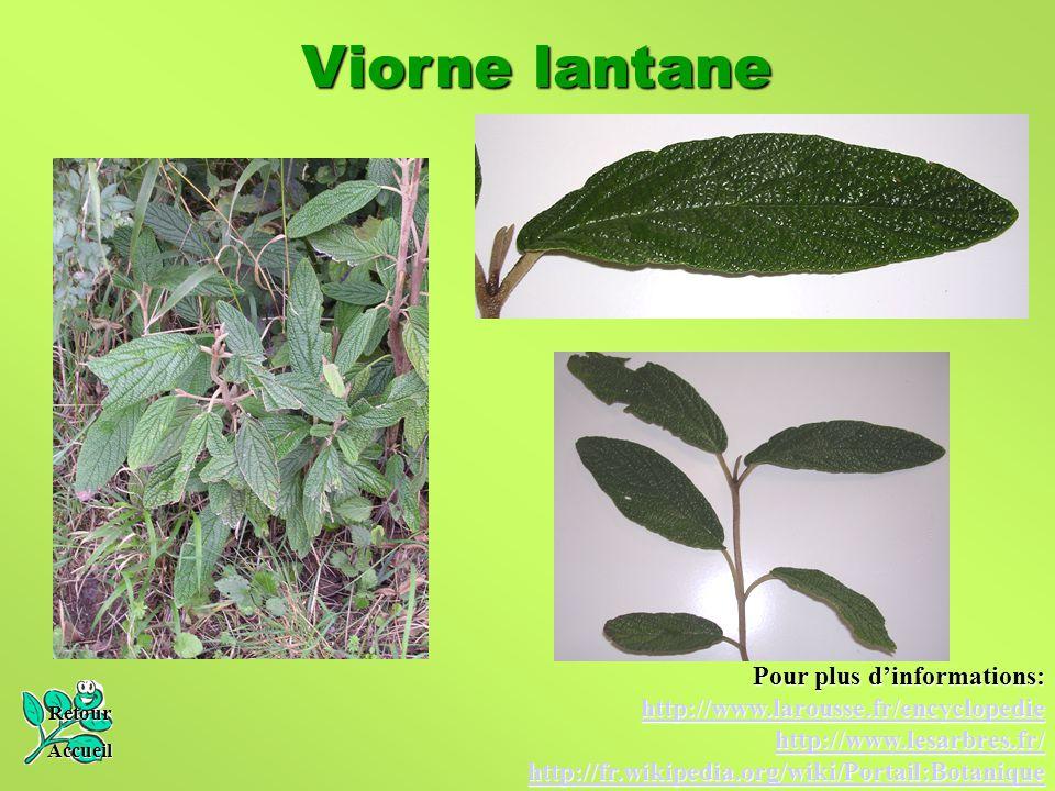 Viorne lantane Pour plus d'informations: