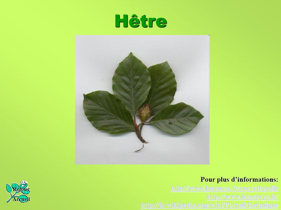 Hêtre Pour plus d'informations: http://www.larousse.fr/encyclopedie