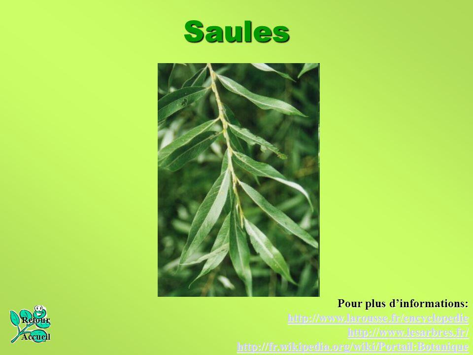 Saules Pour plus d'informations: http://www.larousse.fr/encyclopedie