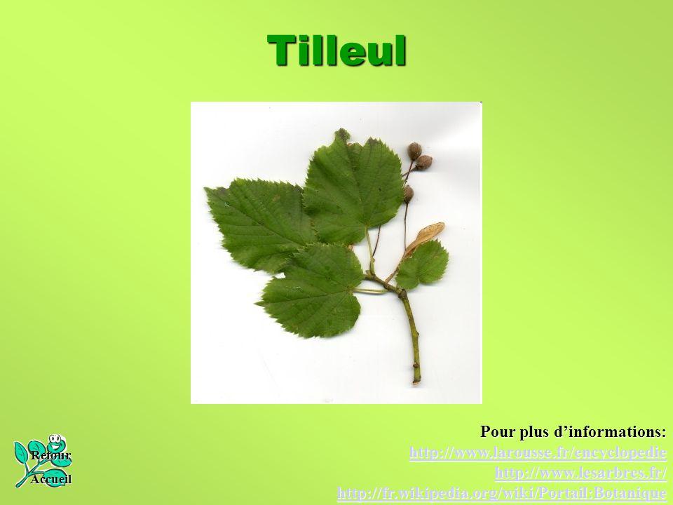 Tilleul Pour plus d'informations: http://www.larousse.fr/encyclopedie