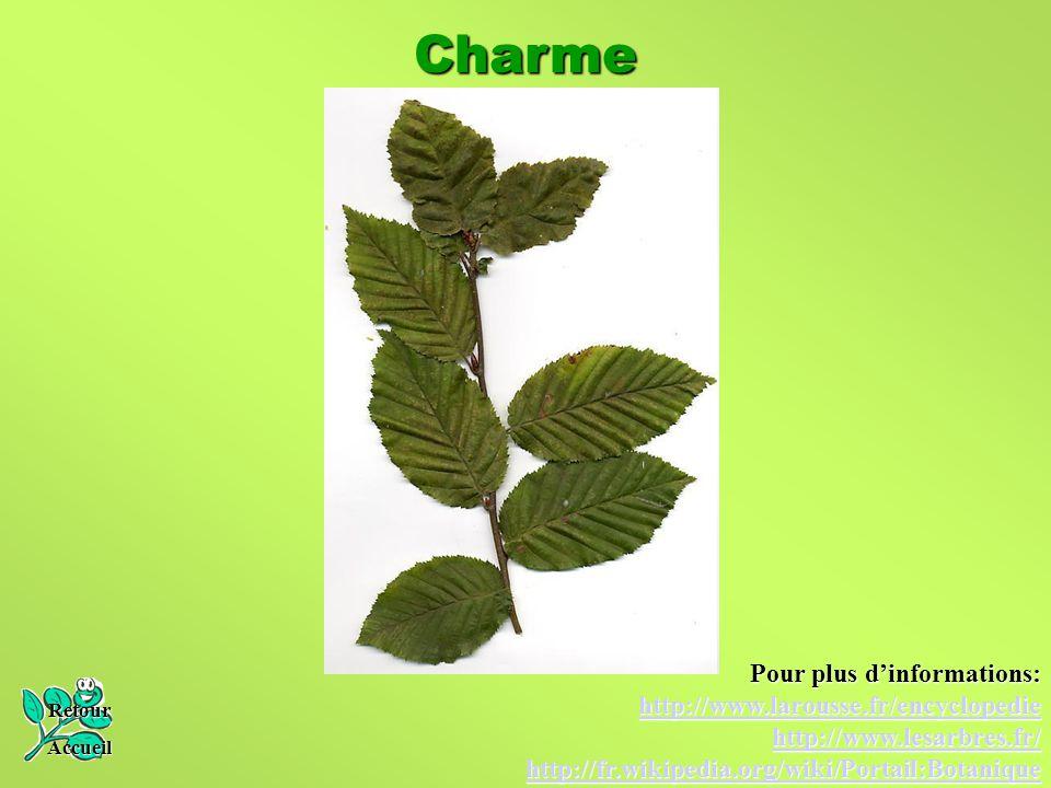 Charme Pour plus d'informations: http://www.larousse.fr/encyclopedie