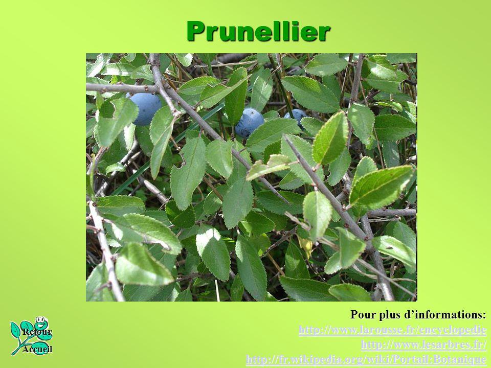 Prunellier Pour plus d'informations: