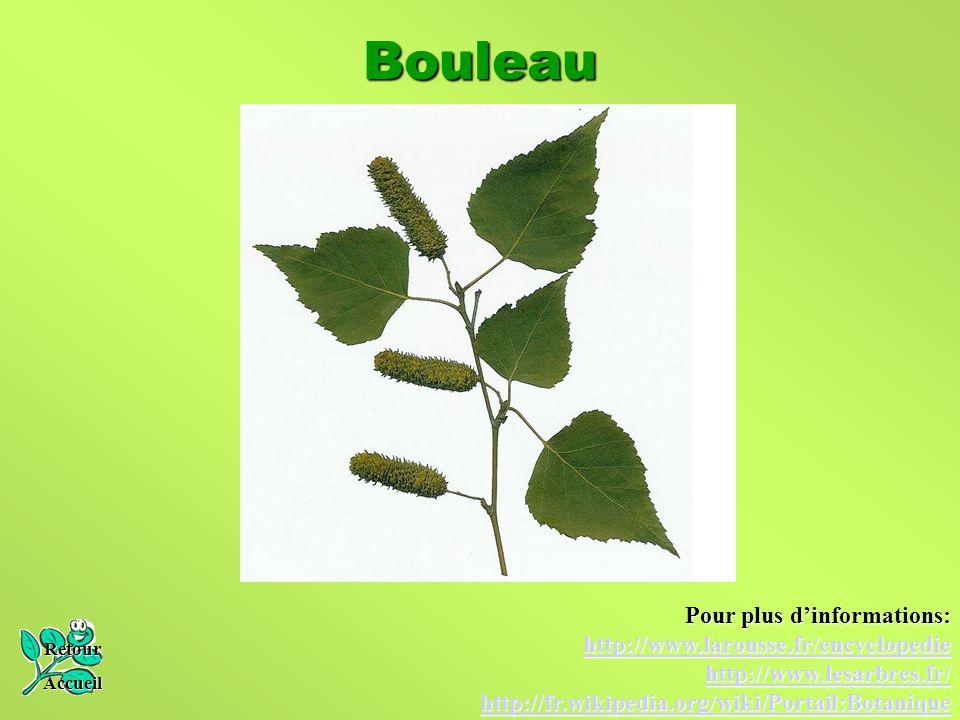 Bouleau Pour plus d'informations: http://www.larousse.fr/encyclopedie