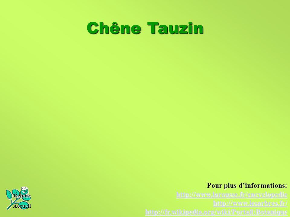 Chêne Tauzin Pour plus d'informations: