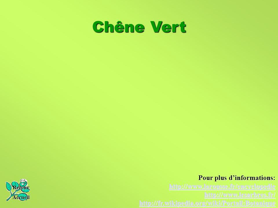 Chêne Vert Pour plus d'informations: