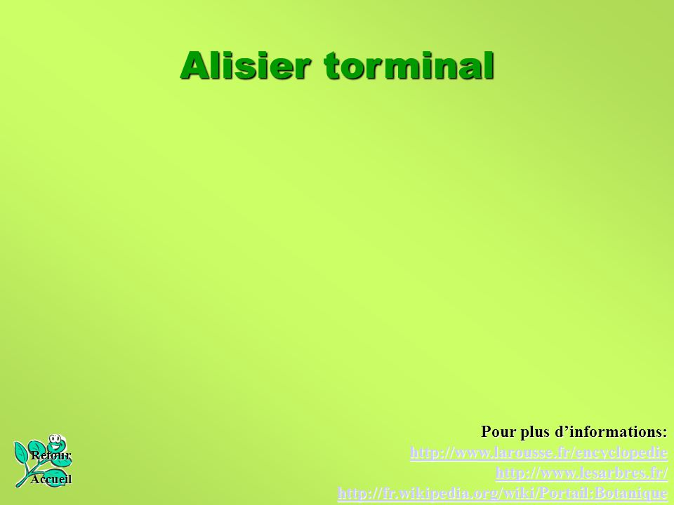 Alisier torminal Pour plus d'informations: