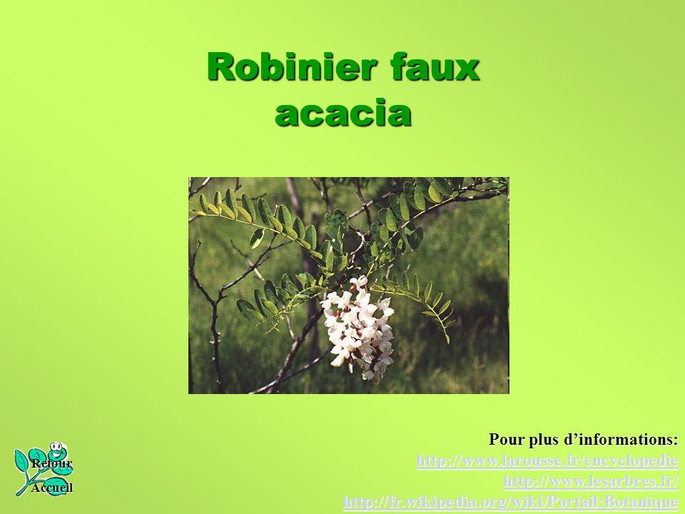 Robinier faux acacia Pour plus d'informations: