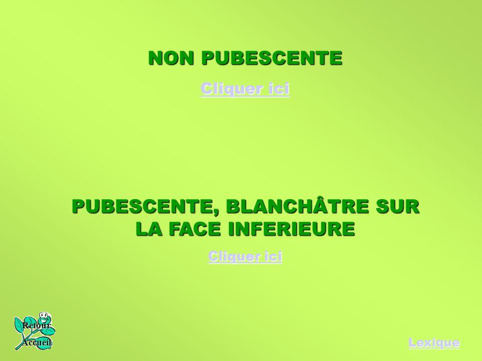 PUBESCENTE, BLANCHÂTRE SUR LA FACE INFERIEURE