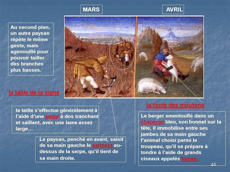 MARS AVRIL la taille de la vigne la tonte des moutons