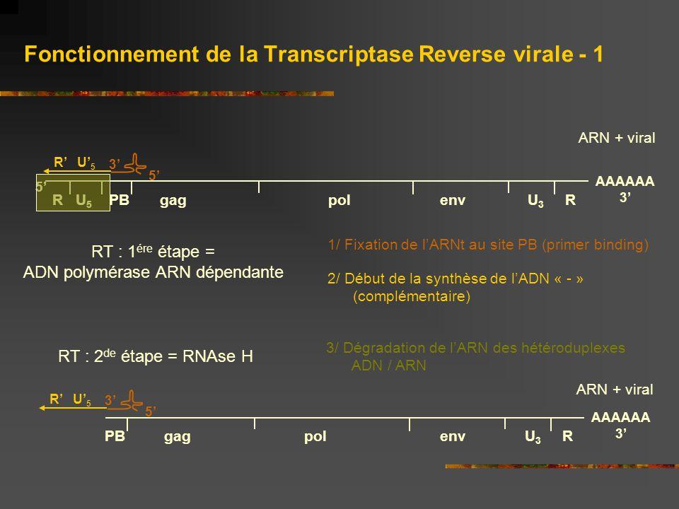 Fonctionnement de la Transcriptase Reverse virale - 1