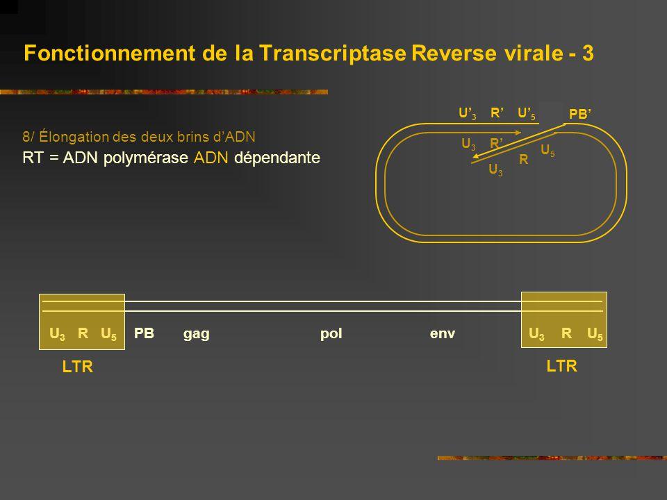 Fonctionnement de la Transcriptase Reverse virale - 3