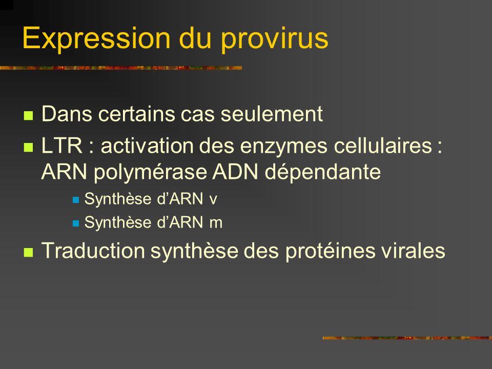Expression du provirus